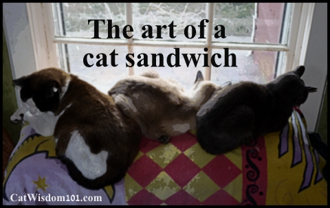 cat-sandwich-art