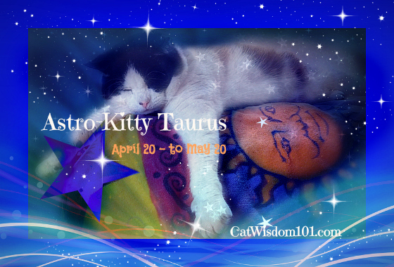 Taurus cat astrology