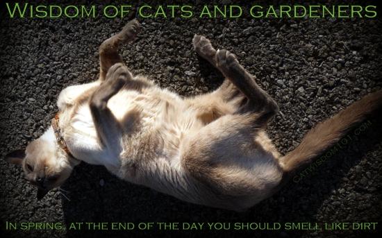 feline_earth_day