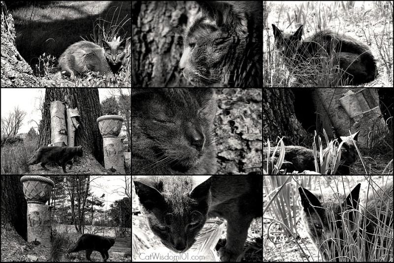cat-gris gris-black & white-secrets