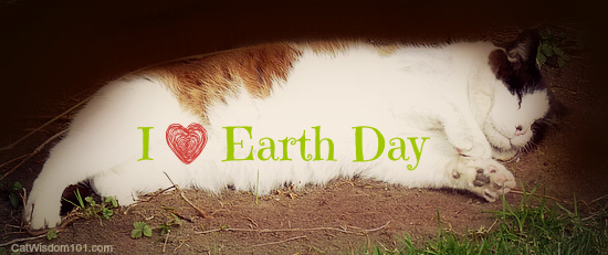 earth day-cats