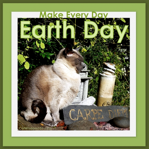 earth day-quote-carpe diem-cats-merlin