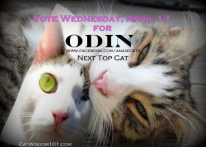 vote-Odin-Next Top Cat-amazecats