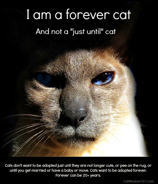 Forever cat-adoption-poster