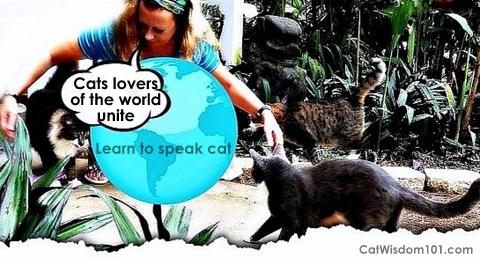 Layla Morgan Wilde-cat behaviorist-cats
