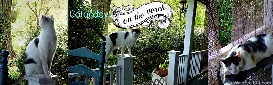 cat-bird-hunting-porch-caturday