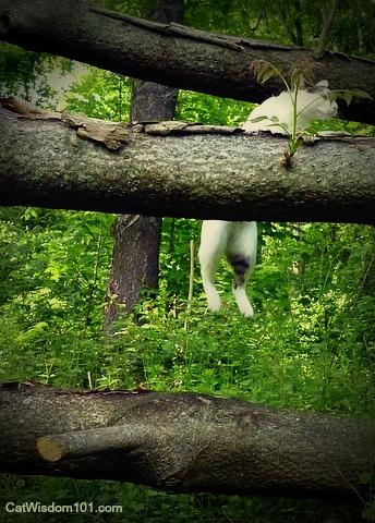 cat-climbing-logs-parkour
