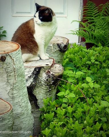 cat-domino-birch logs