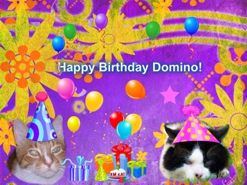 cat-domino-birthday