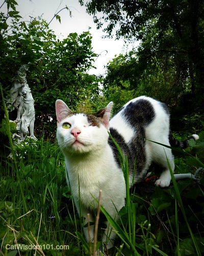 cat-odin-garden