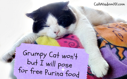 cat-quote-purina-sweepstakes-picture paw fect