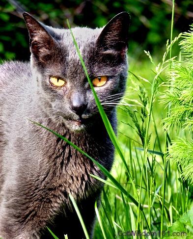 cat-smiling-grass-garden