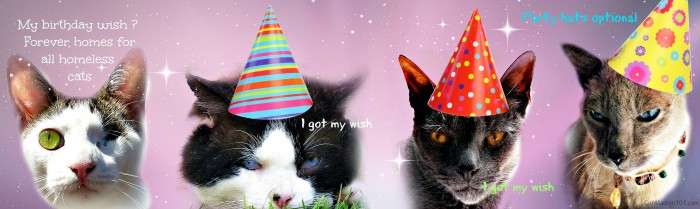 Odins 3rd Birthday Pawty Purrfect Prizes