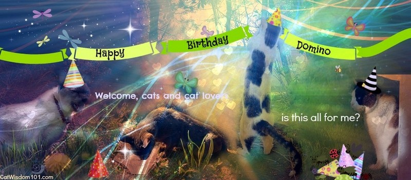 Former Feral Cat Domino's 10th Wild Birthday Party