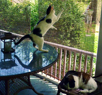 cats-climbing-porch-dancing