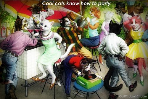 outdoor cat party
