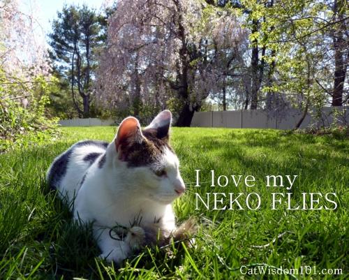 neko flies-foxifur-outdoors-interactive play