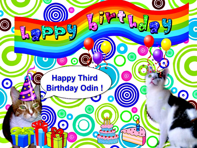 odin-birthday-cat