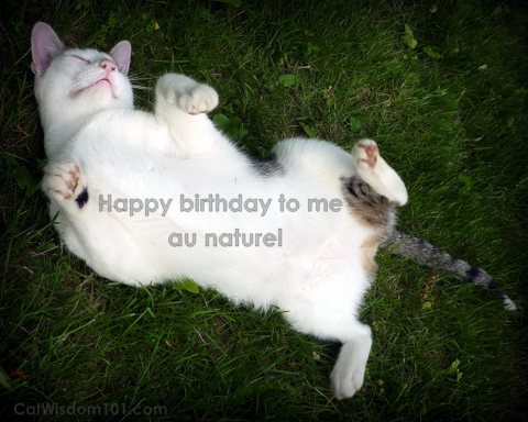 odin-cat-funny-birthday