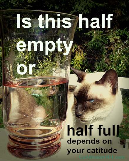 Quote Cat Glass Saturday Photo Hunt Half Full Half Empty Cat