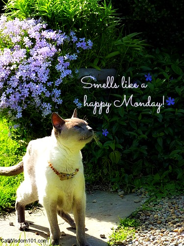 quote-cat-merlin-happy monday