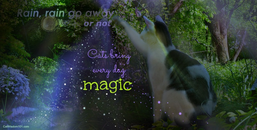 rain-quote-cat-magic