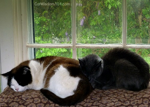 wisteria-cats-butt pillows