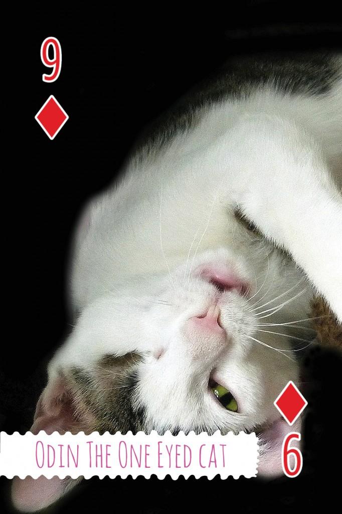Amazecats-odin-cat wisdom 101