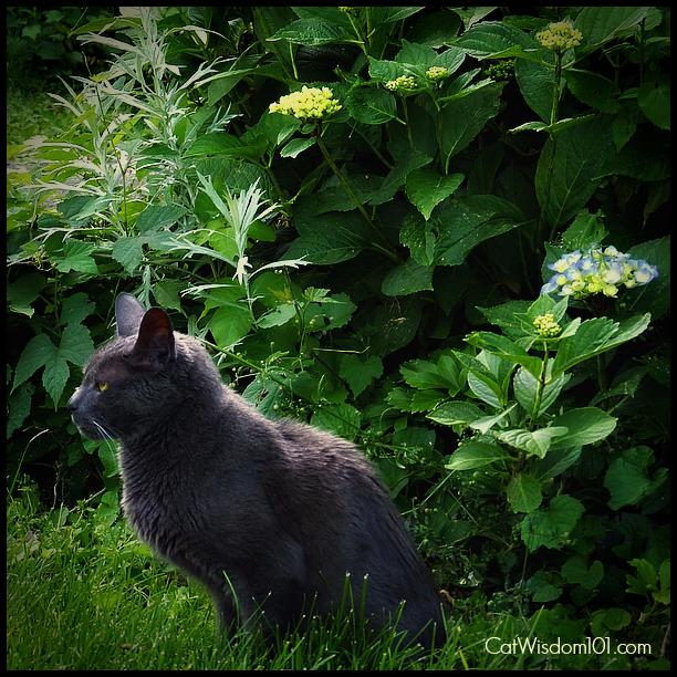 -Gris Gris-garden-quote-cat