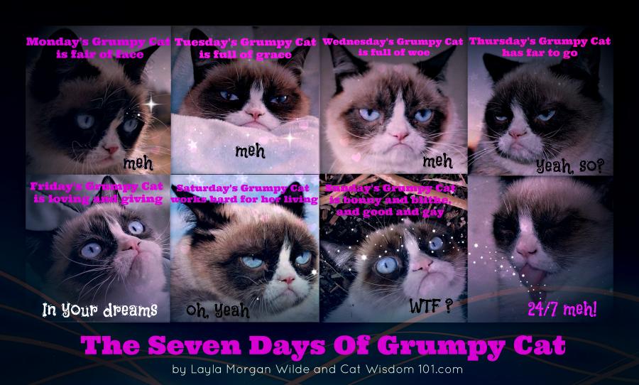 Cats , Feline Funnies , Man Cat Mondays , Mondays With Merlin