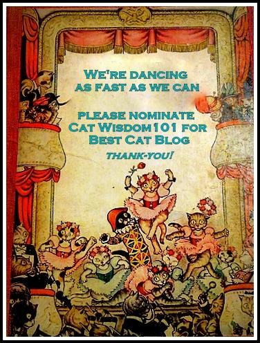 Pettie awards-best cat blog-cat wisdom 101