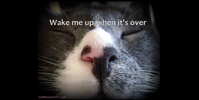 cat-quote-wake me up-vet-tech-anesthesia