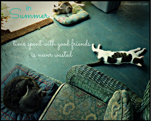 cats-summer-quote-friends