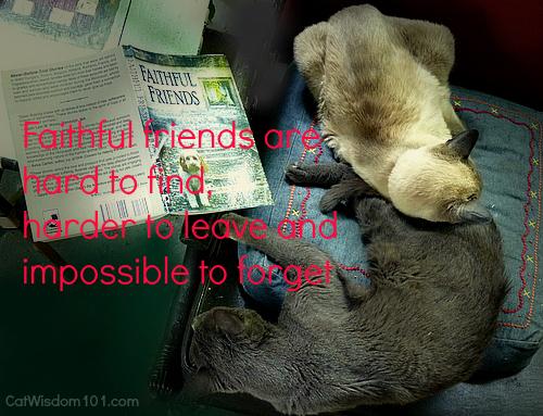 faithful friends-holocaust pet book-giveaway