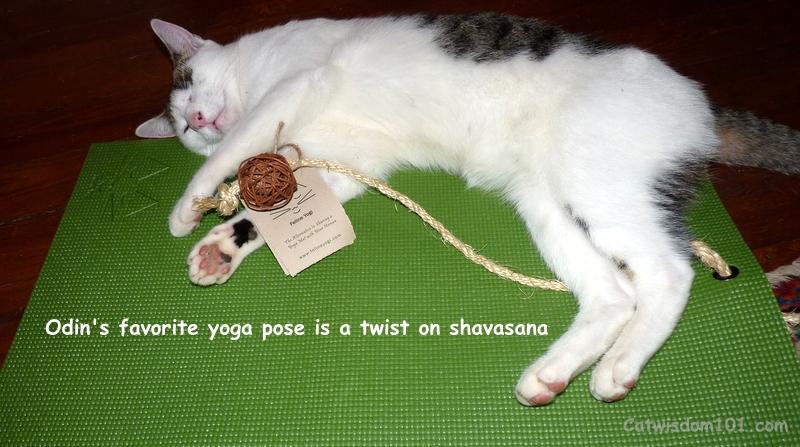 Cat Yoga Mat Giveaway From Feline Yogi