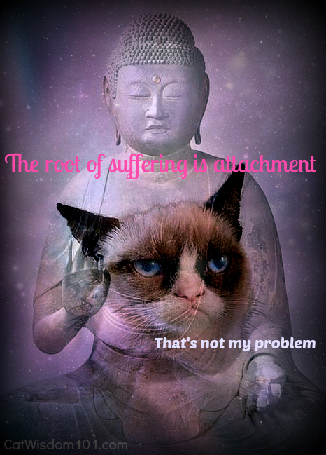 grumpy cat buddha Quoteko
