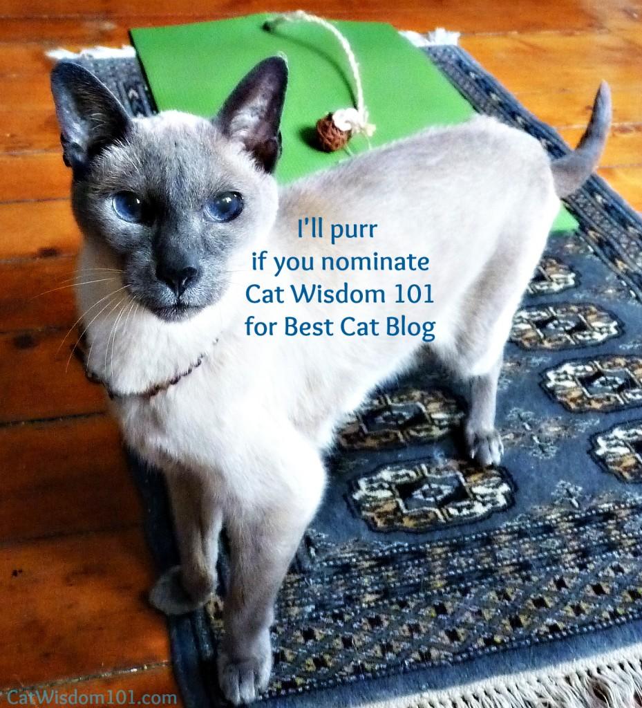 merlin-pettie award--yoga cat