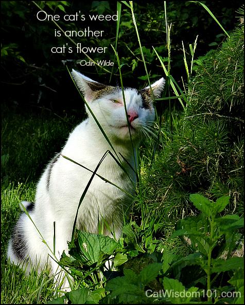 odin-cat-garden-quote-weeds-flower