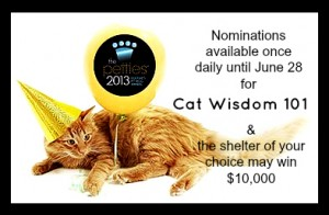 pettie awards 2013-cat wisdom 101