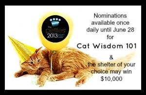pettie awards 2013-cat wisdom 101