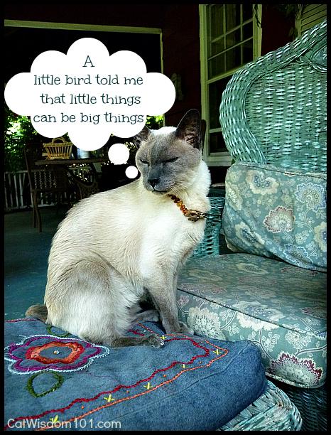 quote-cats-birds-wisdom