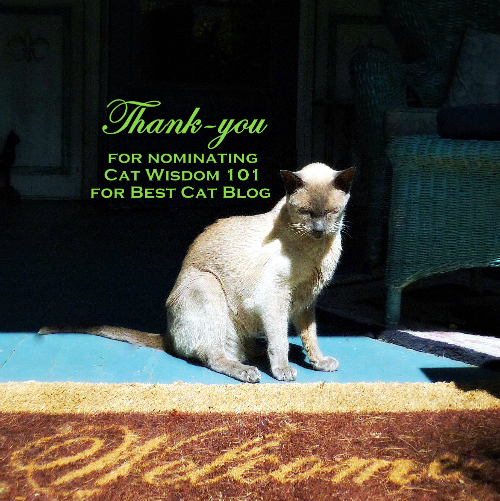 welcome-cat-merlin-thank-you -pettie awards