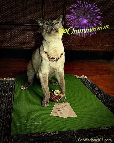 yoga-cat-merlin-mat