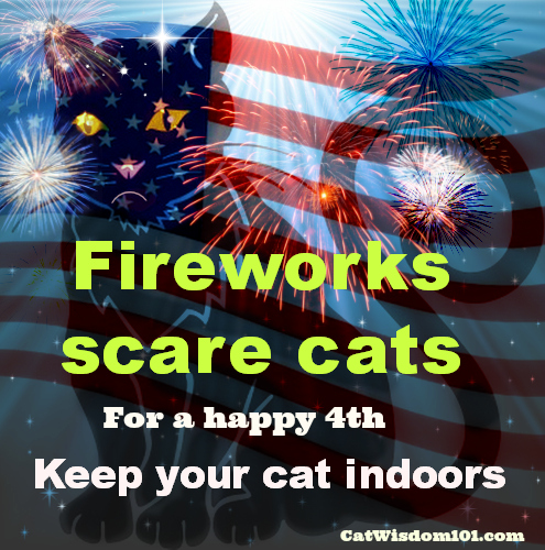 4th of july-cats-scare-fireworks