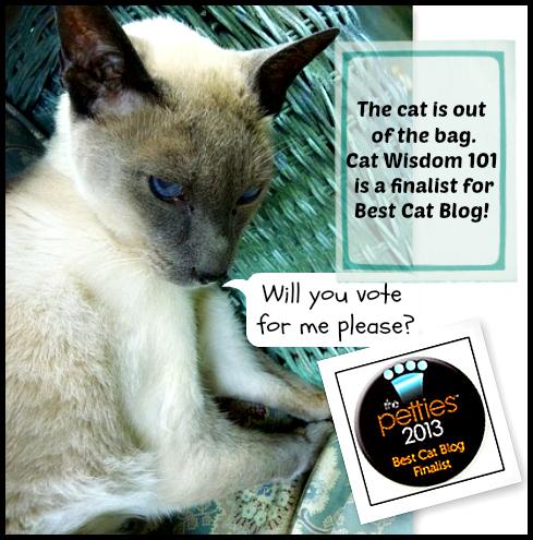 Cat Wisdom 101-best cat blog-pettie award finalist