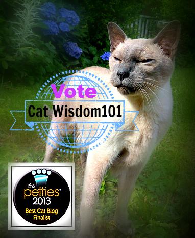 Merlin-cat-cat wisdom 101-pettie awards