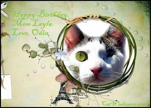 Odin-birthday-layla-cats