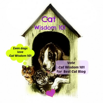 Vote-cat wisdom 101-pettie award-best cat blog