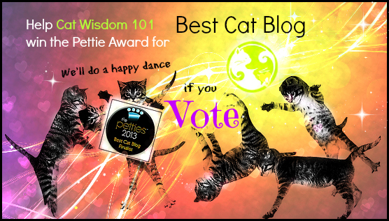 cat wisdom 101-pettie awards-best cat blog-