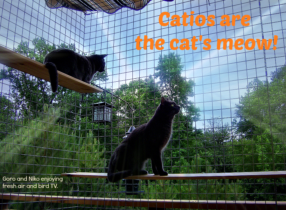 It s safer for cats to be indoor only but there are several options